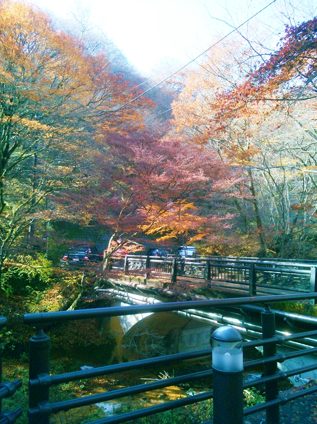 河鹿橋の紅葉
